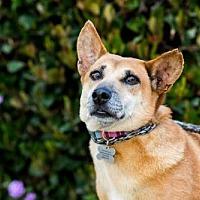 Adopt A Pet :: Apinya - San Diego, CA