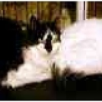 Domestic Mediumhair Cat for adoption in Trexlertown, Pennsylvania - Barn Cats!