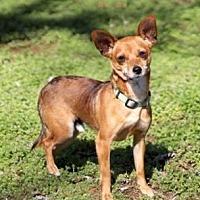 Adopt A Pet :: KING LEON - Brattleboro, VT