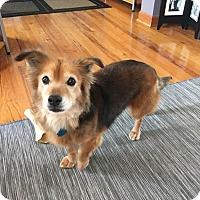 Adopt A Pet :: Faith - simpsonville, SC