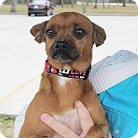 Adopt A Pet :: Sophie - Kingwood, TX