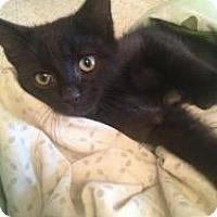 Adopt A Pet :: Dodge - Justin, TX