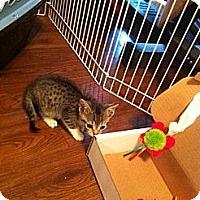 Adopt A Pet :: Sheldon - Summerville, SC