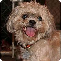 Adopt A Pet :: Wasabi - Scottsdale, AZ