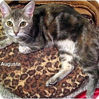 Adopt A Pet :: Augusta - Portland, OR