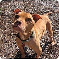 Adopt A Pet :: Yoda - NEED HELP TO PAY VET - Seattle, WA