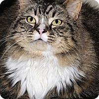 Adopt A Pet :: Tyra - Plainville, MA