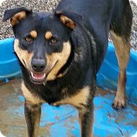 Labrador Retriever Mix Dog for adoption in Gainesville, Georgia - zoey