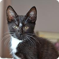 Adopt A Pet :: Worf - Davis, CA