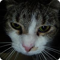 Adopt A Pet :: Laurel - Hamburg, NY