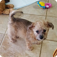 Adopt A Pet :: Franklin - Knoxville, TN