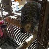 Adopt A Pet :: Lucy - Congo - Blairstown, NJ