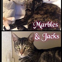Adopt A Pet :: Marbles & Jacks - Foster / 2014 - Maumelle, AR