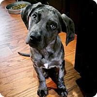 Adopt A Pet :: Slim - Broken Arrow, OK