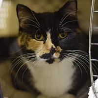 Adopt A Pet :: Surrey - St. Paul, MN