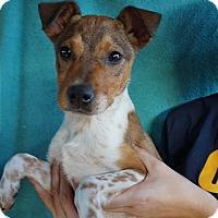 Adopt A Pet :: Sprinkle - Oviedo, FL