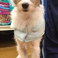 Adopt A Pet :: Poptart - Sugar Grove, IL