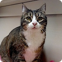 Adopt A Pet :: Dottie - Winchendon, MA