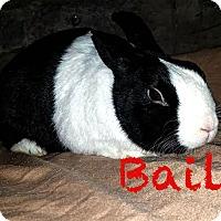 Adopt A Pet :: Bailey - Elizabethtown, KY