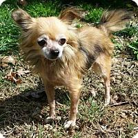 Adopt A Pet :: SERENITY - Andover, CT