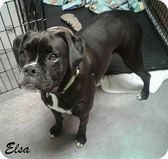 Boxer Dog for adoption in mooresville, Indiana - Elsa