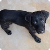 Adopt A Pet :: Elmer - Tampa, FL