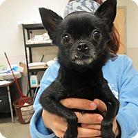 Adopt A Pet :: Pipers - Murphysboro, IL