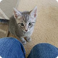 Adopt A Pet :: Roxy - Hollywood, FL