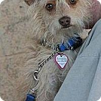 Adopt A Pet :: Einstein - Palmdale, CA