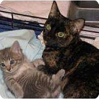 Adopt A Pet :: Caley - Jacksonville, FL