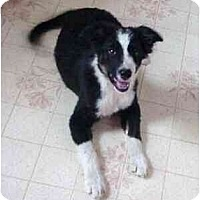 Adopt A Pet :: Circuit--ADOPTED!!! - Tiffin, OH