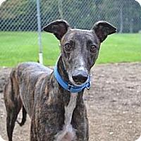Adopt A Pet :: Carolina (Carolina Shine) - Chagrin Falls, OH