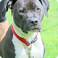 Adopt A Pet :: Sylvester - Reisterstown, MD