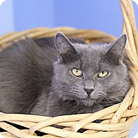 Adopt A Pet :: Mikushla - Chicago, IL
