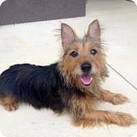 Adopt A Pet :: Raymond - Riverview, FL