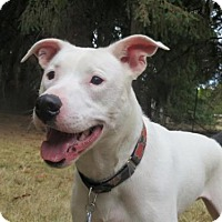 Adopt A Pet :: Chance - Eugene, OR