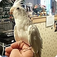 Adopt A Pet :: Frost - Lenexa, KS