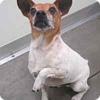 Adopt A Pet :: Opie - Holton, KS