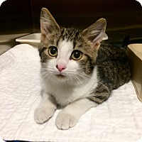 Adopt A Pet :: Jace - Breese, IL