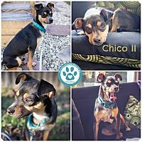 Adopt A Pet :: Chico II - Kimberton, PA