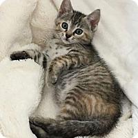 Adopt A Pet :: Heihei - Land O Lakes, FL