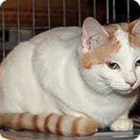 Adopt A Pet :: Lena - Taftville, CT