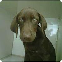 Adopt A Pet :: Porthos - Cumming, GA