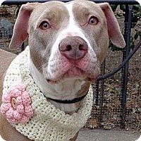 Adopt A Pet :: Hazel - Roaring Spring, PA