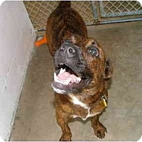 Adopt A Pet :: Corky - Winter Haven, FL