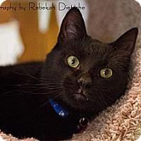 Adopt A Pet :: Aragorn - Byron Center, MI