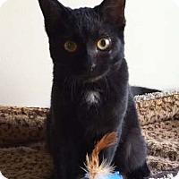 Adopt A Pet :: Banks - Merrifield, VA