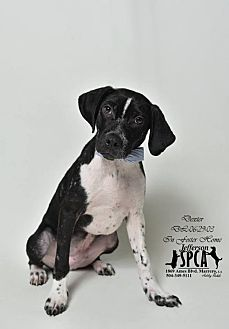 Hound (Unknown Type) Mix Dog for adoption in Marrero, Louisiana - Dexter - In Foster Home