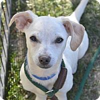 Adopt A Pet :: Yoda - Meridian, ID