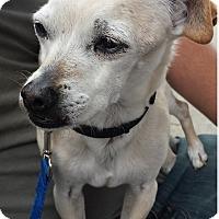Adopt A Pet :: Thurston - Torrance, CA